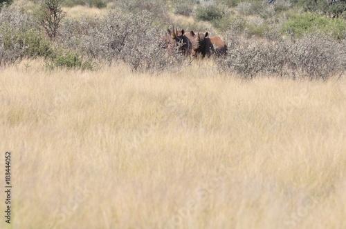 Fotobehang Neushoorn A family of rhinos in the african bush. Namibia