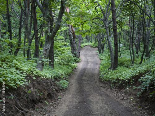 Papiers peints Route dans la forêt Ulleungdo to Dokdo tour summer.