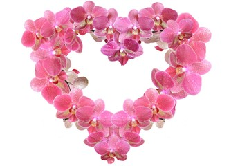Heart from pink orchids with dew drops isolated on white background