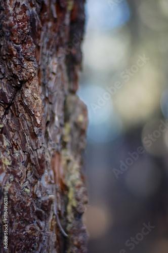 Tree bark 3 - 188491631