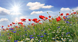 Summer happiness: meadow with red poppies :)