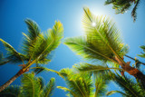 Coconuts palm tree perspective view. Nature background. Wallpaper. - 188496061