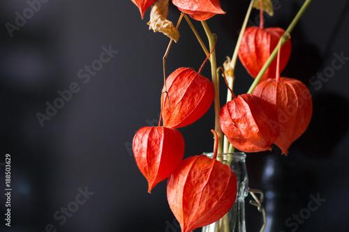 Foto Murales Natürliche Lampions