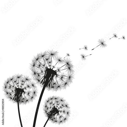 Silhouette of a dandelion - 188521854
