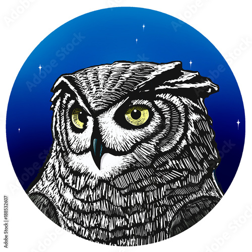 Owl. Illustration of a owl in front of star lit night sky.