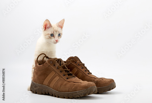Foto Murales young kitten on white background with men's shoes