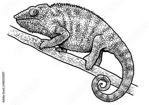 Ilustracja kameleon, rysunek, grawerowanie, atrament, grafika liniowa, wektor