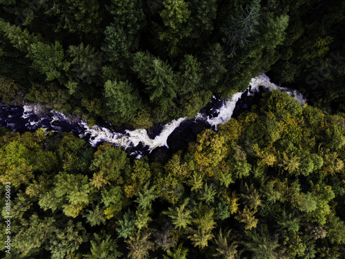 Foto Murales River through Forest