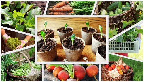 Foto Murales collage of vegetables - products of vegetable garden