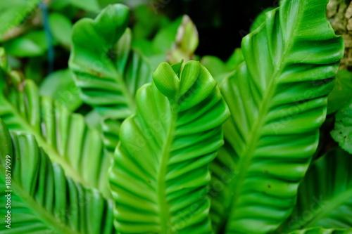 Fresh green garden landscaping and beautiful green pots in a refreshing garden. - 188579099