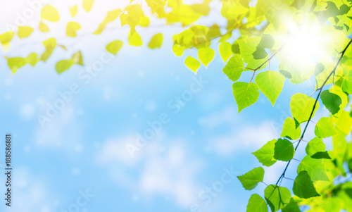 Spring bright background with birch leaves against the sky - 188586881