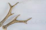 deer antlers on wihite rustic background - 188588664