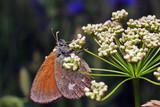Butterfly  - 188588860