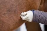 veterinarian checking horse