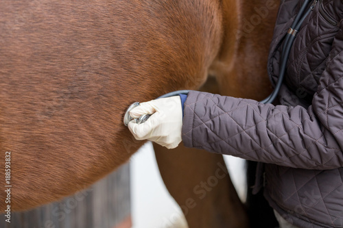 Aluminium Paarden vet at work with stethoscope at a horse
