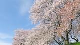 日本の春の風�...