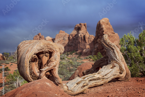 Twisted Wood at Arches National Park
