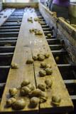 reproduction table snail farm - 188646239