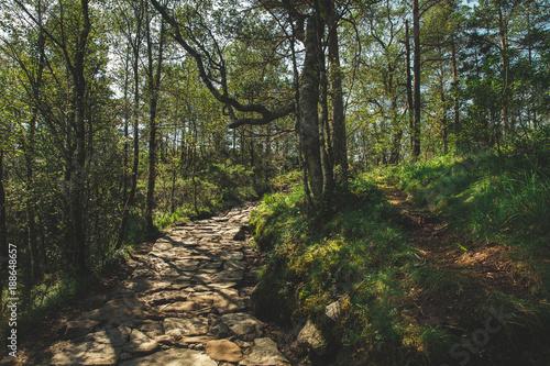 Fotobehang Weg in bos camino preikestolen por el bosque, noruega
