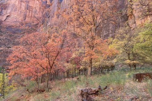 Papiers peints Cappuccino Herbstfarben