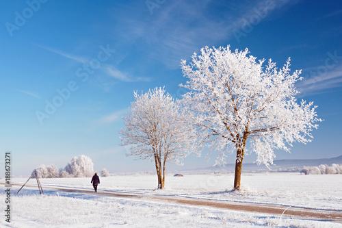 Foto Murales Winterspaziergang