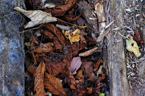 Keuken foto achterwand Natuur Winter leaves
