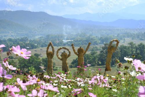 Cosmos garden in Chiangmai, Thailand. - 188685624