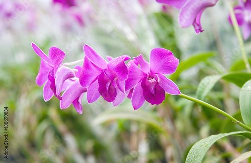 orchid in garden - 188690884