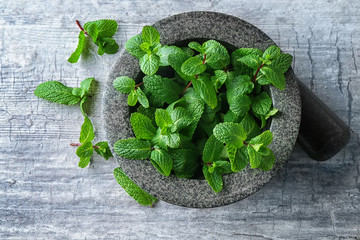 Mortar with fresh lemon balm on grey background