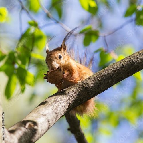 Foto Murales portrait of a squirrel