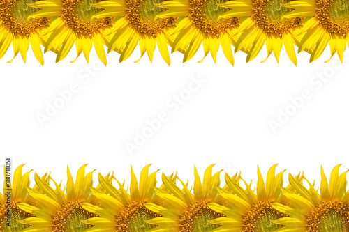 Papiers peints Jaune close up of sunflower