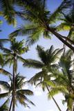 Palm Trees - 188719070