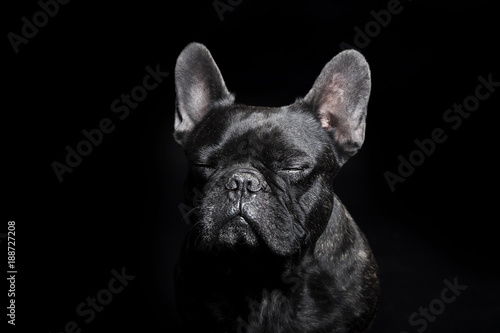 Deurstickers Franse bulldog Black French Bulldog with close eyes on the black background