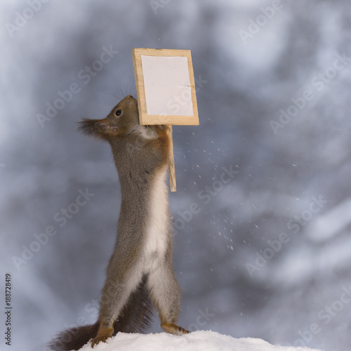 red squirrel holding a sign - 188728419