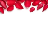 Red rose flower petal banner. Rose petals isolated on a white background. - 188737279