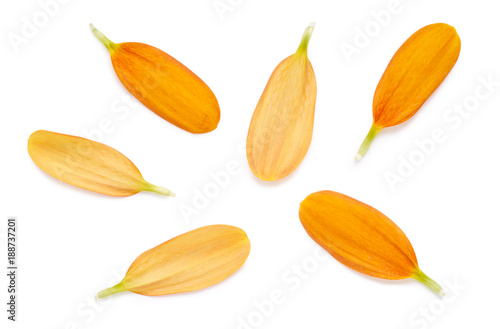 Foto Murales Yellow Petals isolated on a white background.