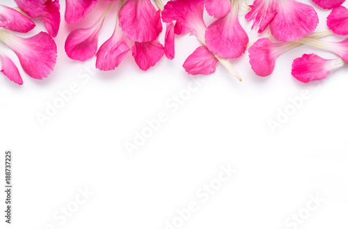 Pink carnation flower petal banner. Petals isolated on a white background.
