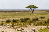 Etosha-Phanne mit Baum, Namibia, Ethosha Pan with Tree, Namibia © Cornelia Pithart