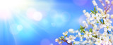 Spring Blooming - Sunlight On Almond Blooms - 188754073