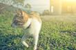 little cat walk