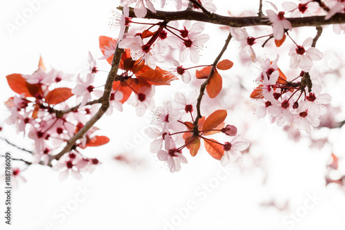 Keuken foto achterwand Natuur spring tree in the park