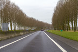 avenue roadside scenery