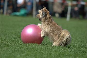 Treibball mit kleinem Hund