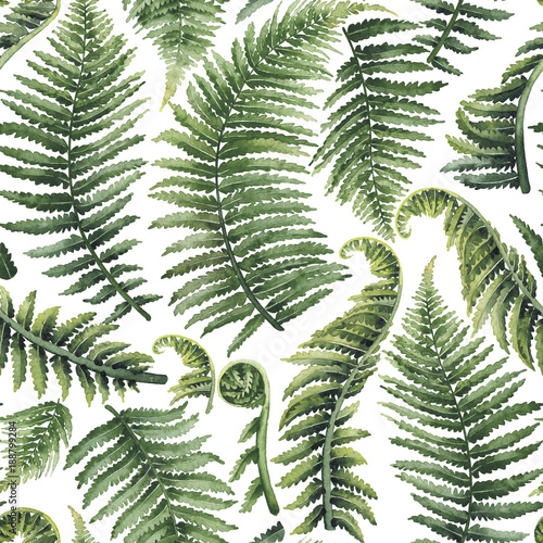 Watercolor fern leaves - 188799284