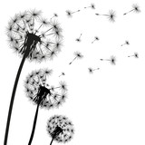 Silhouette of a dandelion - 188799671