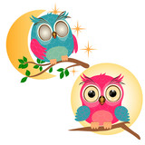 Two little owls on white background. Little owl sleep on the branch with green leaves. Baby owl on brown branch and yellow sun background