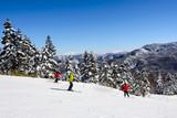anorama of ski resort, slope, skiers among white snow pine trees, Shiga Kogen, Japan