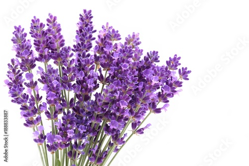 Lavender. - 188833887