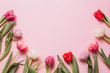 Pink background with tulips. Flat lay and top view.
