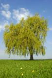 Weide mit frischem Grün